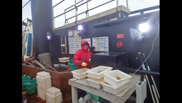 TRAWL SURVEY—Lyle Britt, fish biologist, sorts crab taken from the sea floor in summer 2018 NOAA survey of northern Bering Sea. Britt and team of scientists have been researching effects of climate warming and receding sea ice with startling results.