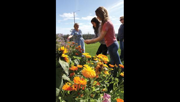 GARDEN TOUR— Cheryl Thompson, left, guided participants through a flowery journey of Nome's gardens, on Sunday, August 13. Here she is pictured in the Bachelder's garden with Brianna Menadelook, center, and Ava Earthman taking photos of calendulas and sunflowers.