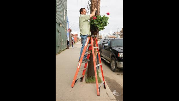 BEAUTIFICATION— Northrim Bank donated thirty potted geranium plants for the beautification of Nome. Paul Kosto of the Chamber of Commerce was among those hanging the plants on utility poles on Front Street